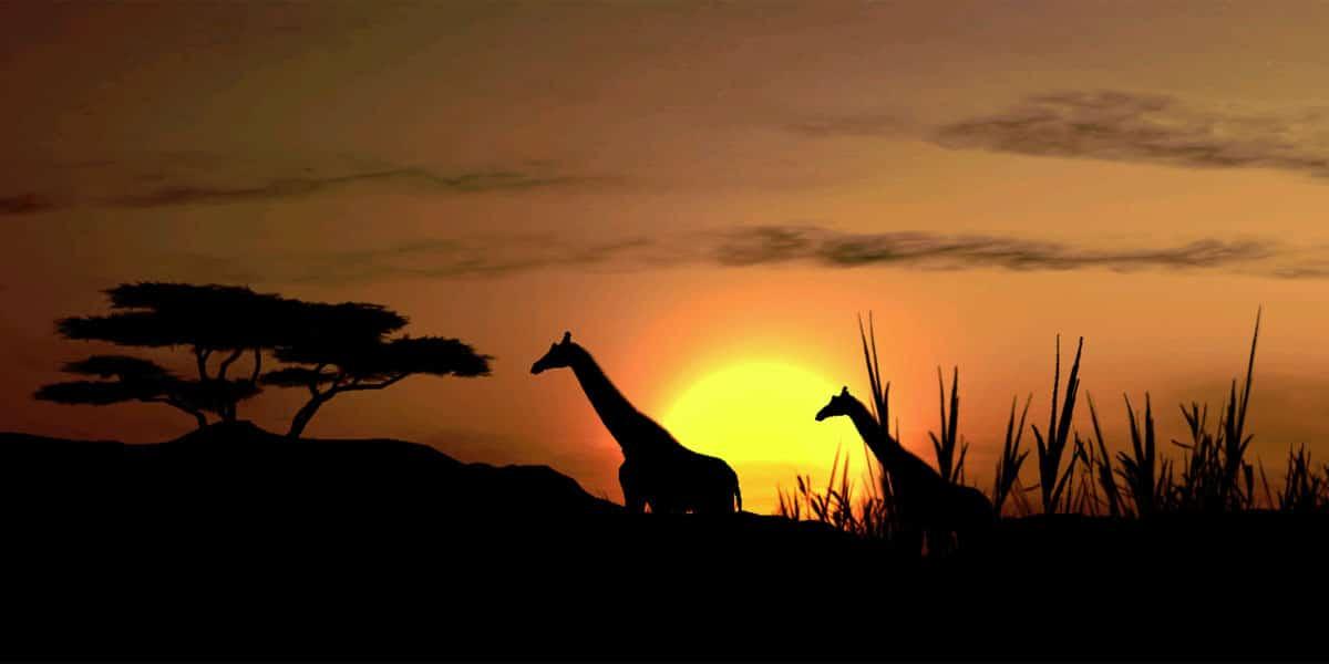 Afrika-Giraffe-Zonsondergang