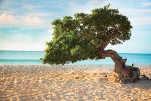 Caribbean-Aruba-Divi-Diviboom-Strand